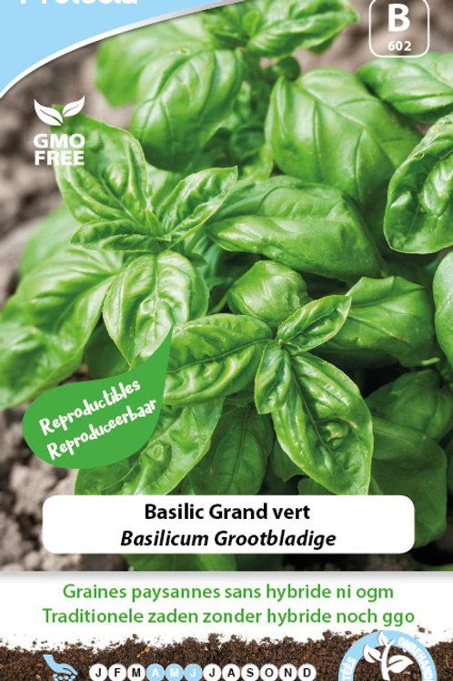 Protecta Basilic grand vert