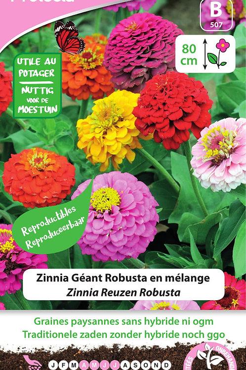 Protecta Zinnia géant Robusta en mélange