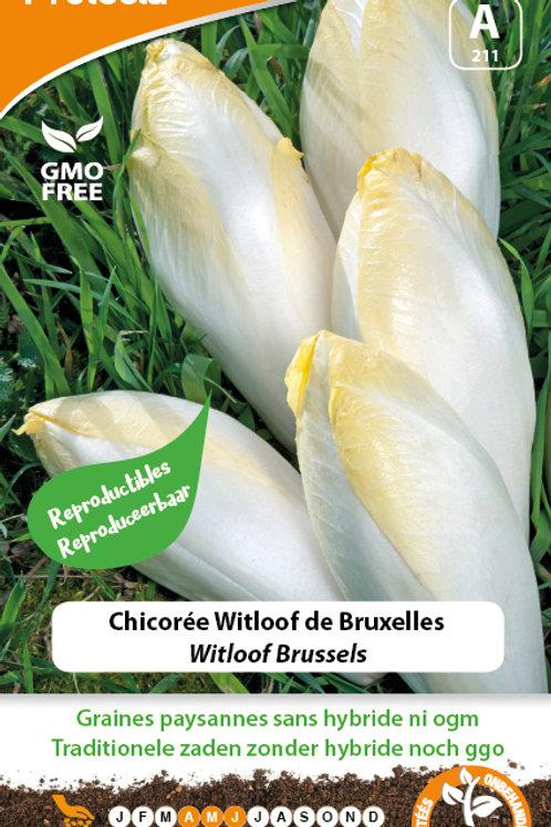 Protecta Chicorée Witloof de Bruxelles