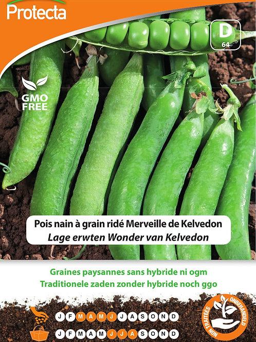Protecta nain à grain ridé Merveille de Kelvedon