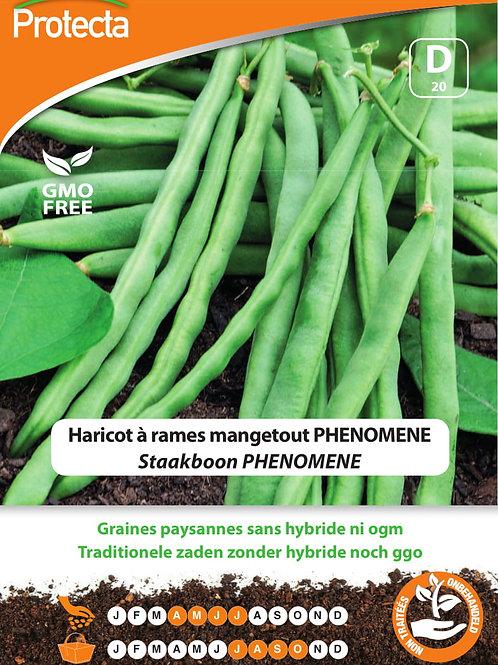 Protecta Haricot à rames mangetout Phenomene