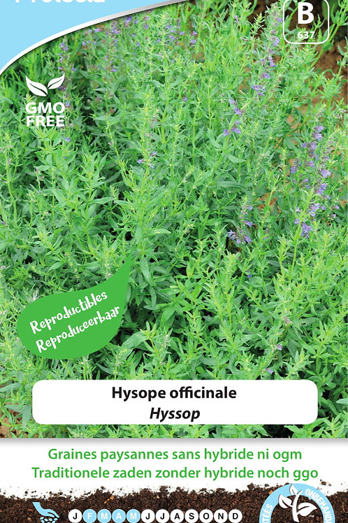 Protecta Hysope Officinale