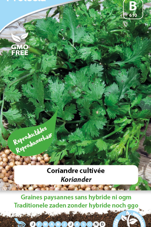 Protecta Coriandre cultivée