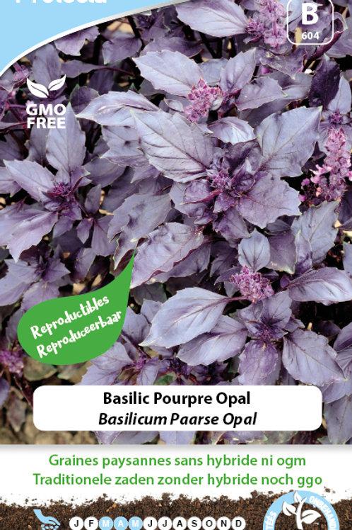 Protecta Basilic pourpre Opal
