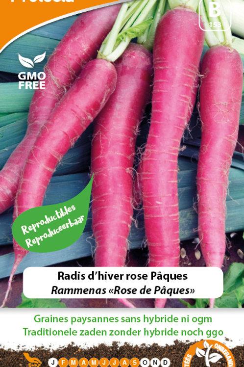 Protecta radis d'hiver rose Pâques
