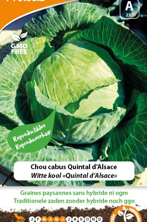 Protecta Chou Cabus Quintal d'Alsace