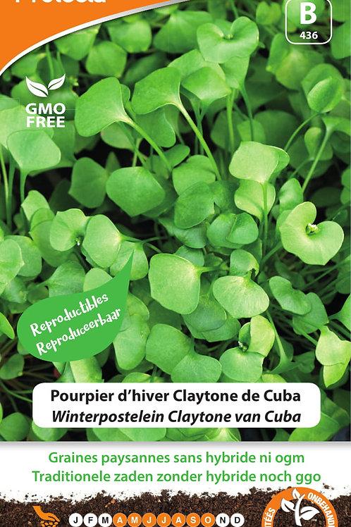 Protecta Pourpier d'hiver Claytone de Cuba
