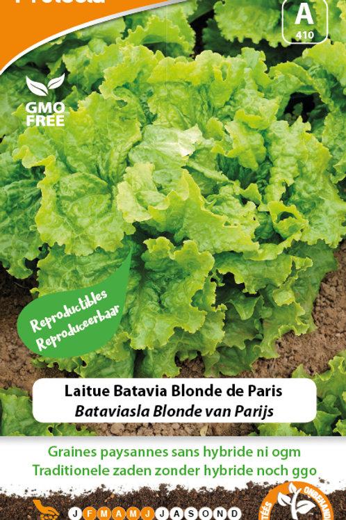 Protecta laitue Batavia blonde de Paris