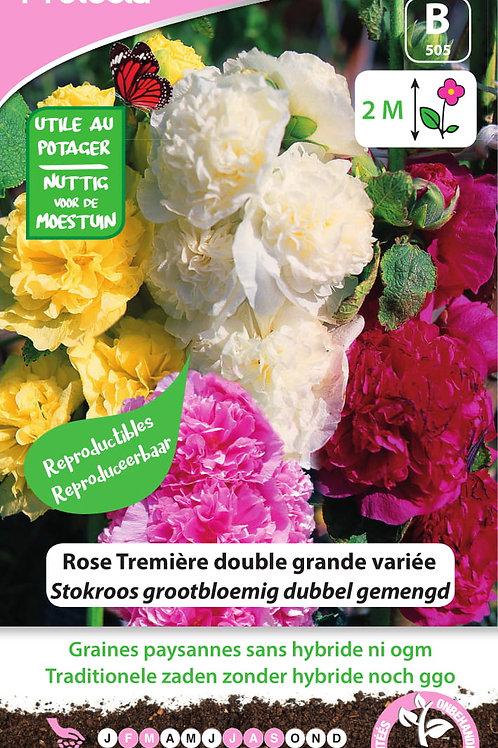 Protecta Rose Trémière double grande variéé