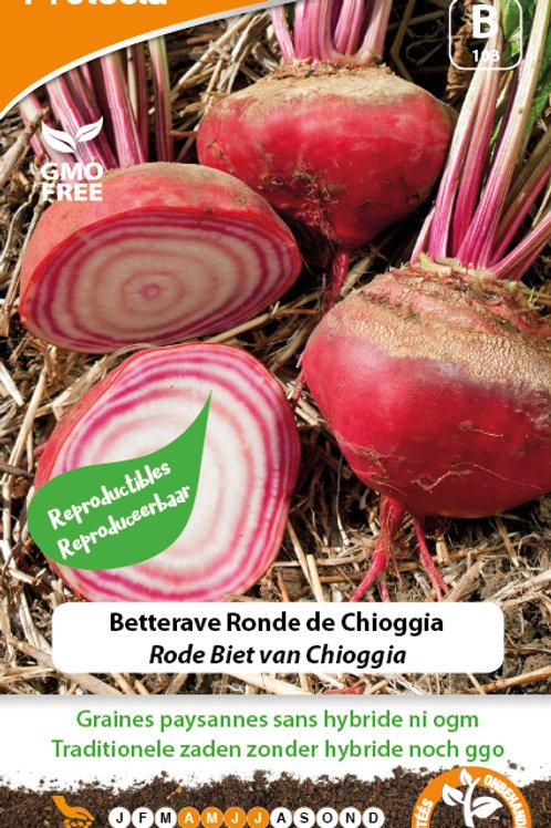 Protecta Betterave ronde de Chioggia