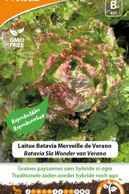 Protecta laitue batavia merveille de Verano