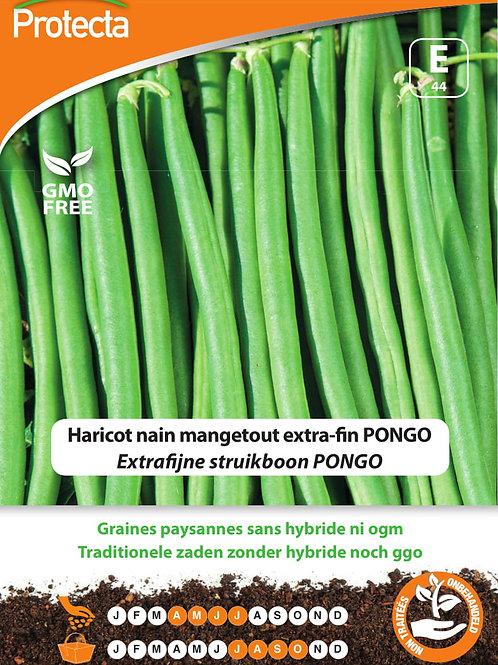 Protecta haricot nain mangetout extra-fin Pongo