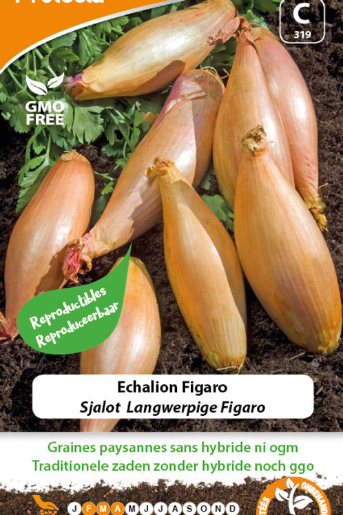 Protecta Echalion Figaro