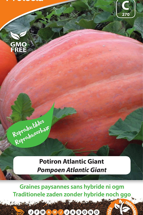Protecta potiron atlantic giant