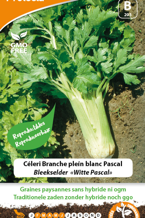 Protecta Céleri plein blanc Pascal