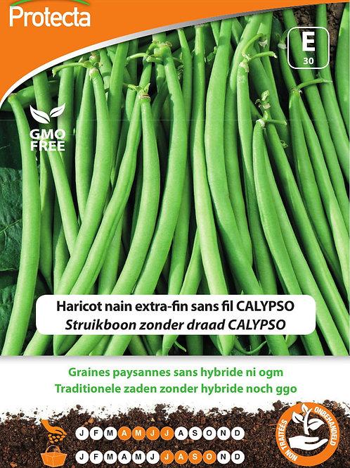 Protecta haricot nain extra-fin sans fil Calypso