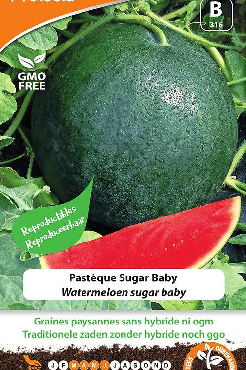 Protecta Pastèque Sugar Baby