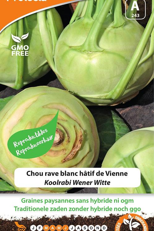 Protecta Chou rave blanc hâtif de Vienne
