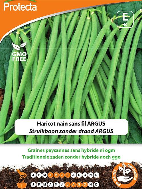 Protecta haricot nain sans fil Argus
