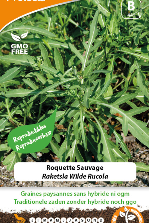 Protecta Roquette Sauvage