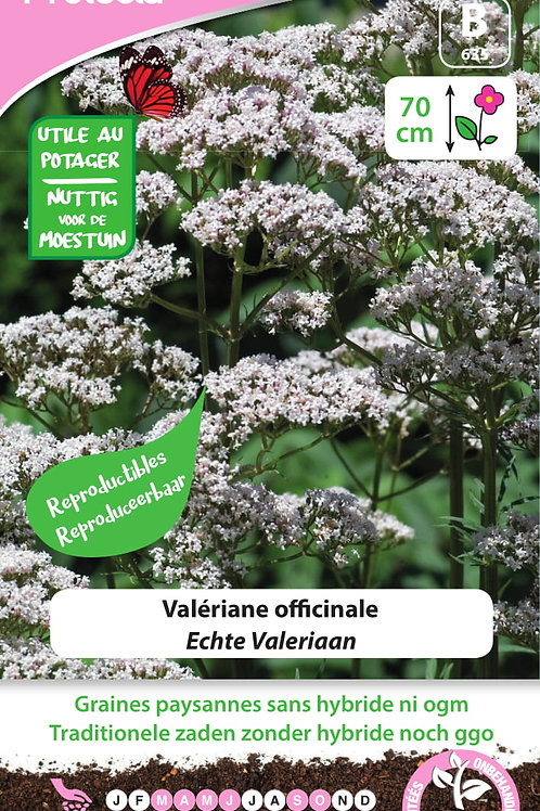 Protecta Valériane Officinale