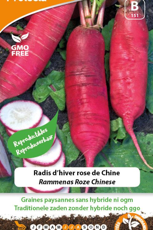 Protecta Radis d'hiver rose de chine