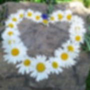 daisy-heart.jpg