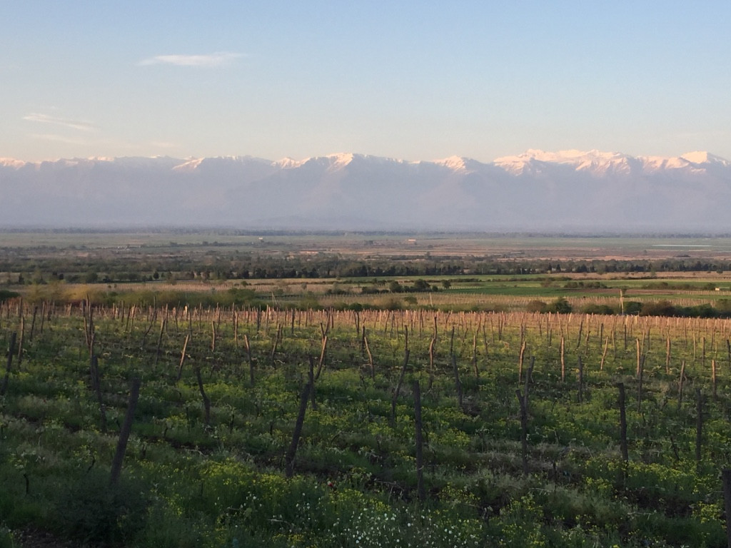 Vines with Mountains