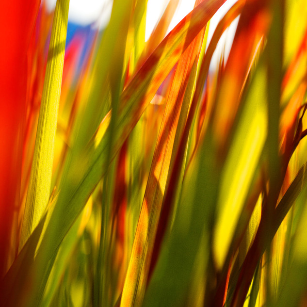 green redgrass3.jpg