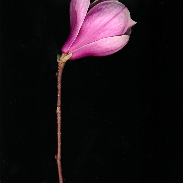 bloom on black 2 jpg.jpg