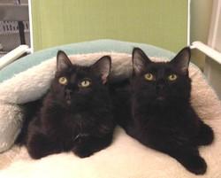 Lenny,Wilbur,Elmer - Adopted!
