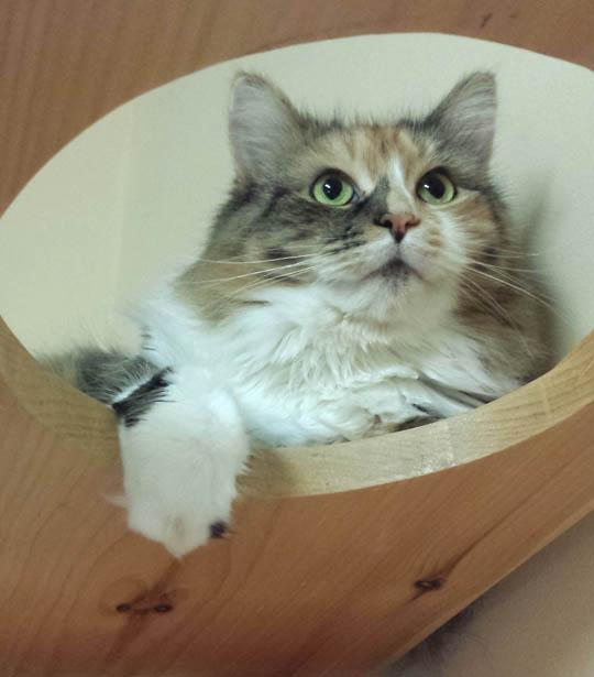 Ella - Adopted 12/31/2015!