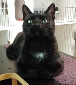 Tisha-Adopted May 2017