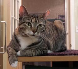 Gilda - Adopted Dec 2015!