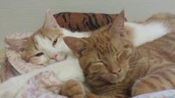 Fred & Sherman - adopted Feb 2016!