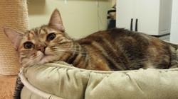 Francine-Adopted June 2017