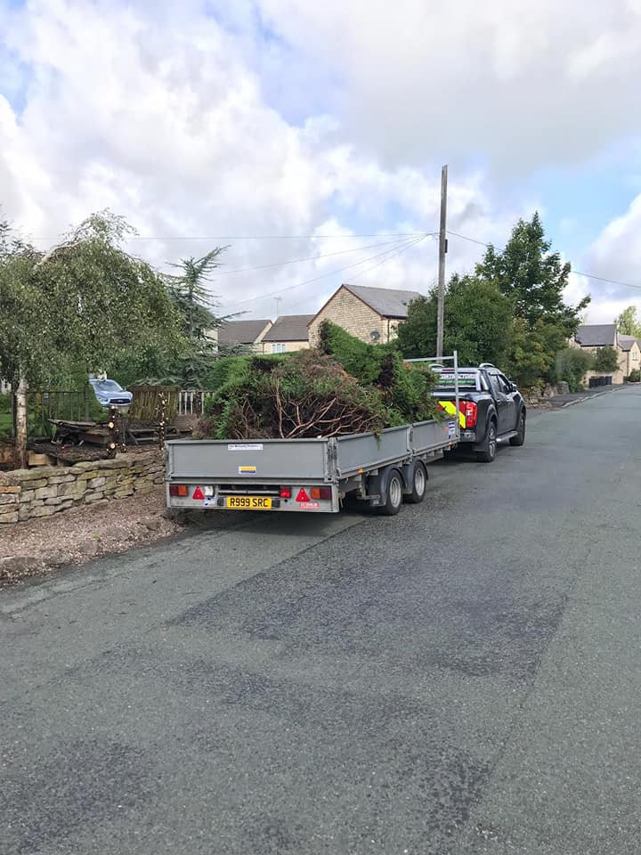 Tree root & Hedgerow removal