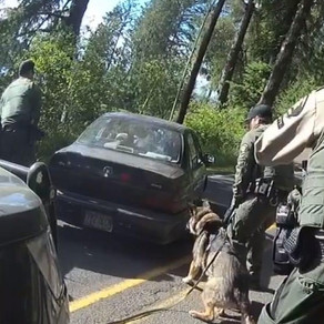 Deputies Apprehend Waldport Kidnapping Suspect