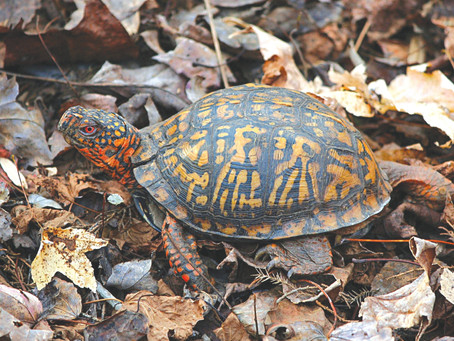 Ligon co-sponsors bill to protect amphibians and reptiles