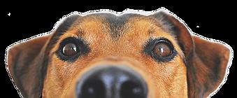 peeking-dog-min copy.png