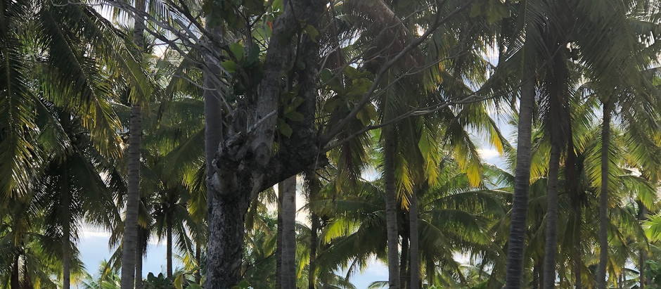 ROOTS & AGRICULTURE IN NARRA, PALAWAN