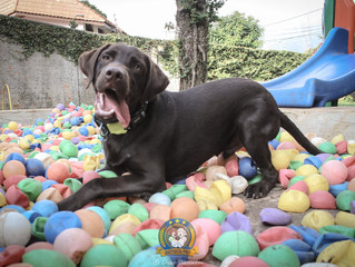 Conheça os sinais de stress em cães