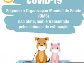 Pet transmite COVID-19?