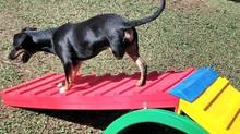 A importância da atividade física para PET's