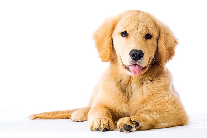 cachorro-dentro-casa-1_edited.jpg