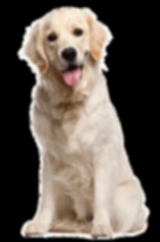 Dog-PNG-File.png