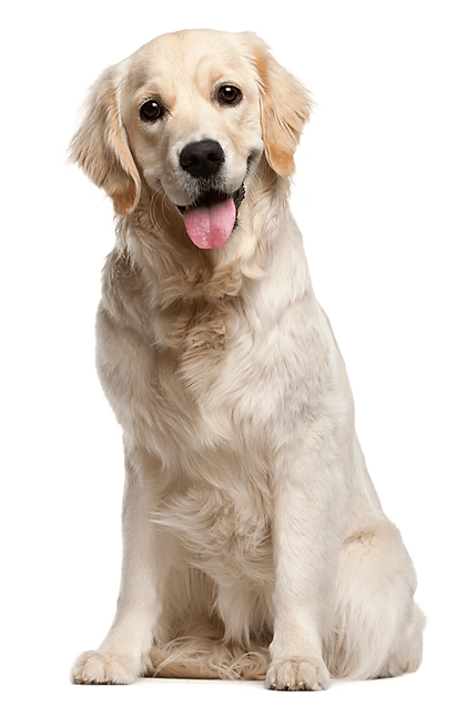 Dog-PNG-File.png