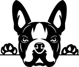 www.ClipArtSVG.com Animal Dog Boston Terrier 7u6h4 Peeking.jpg