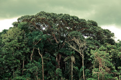 Forest Canopy, Madre de Dios, Peru