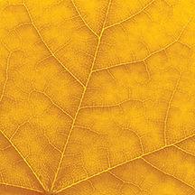 Leaf_GOLD.jpg